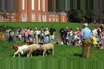 Sheephearing image 300x150.jpg?ixlib=rails 2.1